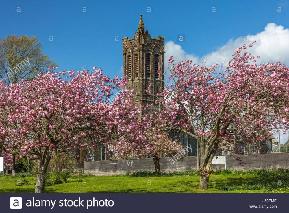 looking-towards-the-fullarton-formerly-st-andrews-church-with-cherry-J50PME.jpg
